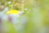 春をさがしに - 撮ろ 撮り 撮る 撮れ 撮れば ruchanのフォト遊び