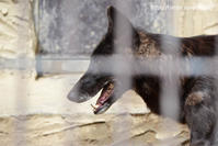 麗しき東山の母、ソニア - 今日ものんびり動物園