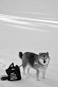 黒白写真 - 写心食堂