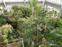 那珂市を歩く 熱帯植物館3 @茨城県 - 963-7837