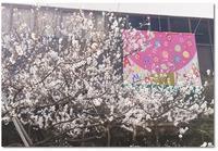 アーモンドフェスティバル@神戸 - ☆Sweets diary☆Ⅱ