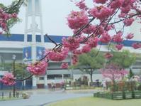 雨が嬉しい - 夢・ファンダンゴ