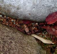 小さな春 - 金沢犀川温泉 川端の湯宿「滝亭」BLOG