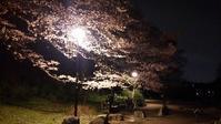 お花見ライドのお知らせ♪ - 坂の町 横浜 鶴見の電動アシスト自転車専門店 Clean Water Factory