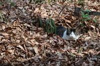 ネコさん、落ち葉の中で気持ち良さそう。 - 平凡な日々の中で