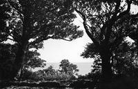 島尻を歩く - chosan
