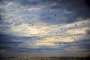 Birds fly - HI KA RI