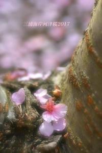 花は散り - 写愛館