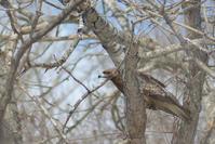 ウトナイ湖へ - Bird-Watching Journal