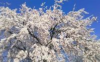 桜前線とともに - 日々のしをり