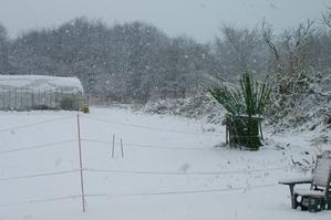 3月の雪、2回目。 - キシノウエンの 今日のてしごと