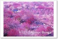 いなべの梅 ポストカード - Mimpi Bunga の旅の思い出