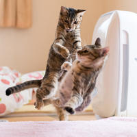 朝から大騒ぎ - 猫と夕焼け