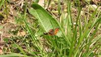 野川公園 3/25 - 山と鳥を愛するアナパパ