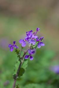 春の花たち - tokoのblog