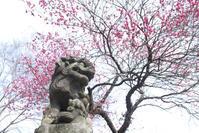 春の始まり☆彡 - DAIGOの記憶