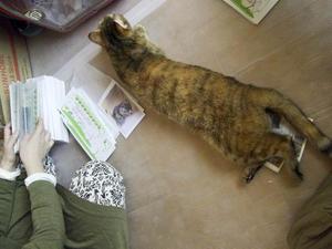 仕事の邪魔も猫のうち - ナンバーワン野郎!