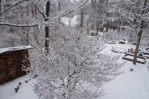 また雪 - カントリーボックス信州の地域燦燦