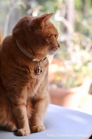 春の庭を眺めるあぺりら  Our Lovely Cat Apelila - お茶の時間にしましょうか-キャロ&ローラのちいさなまいにち- Caroline & Laura's tea break