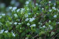 20170326 【自然】いっせいに春の花が咲き出した - 杉本敏宏のつれづれなるままに