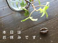 3月26日日曜日 店休日です♪ - 上福岡のコーヒー屋さん ChieCoffeeのブログ