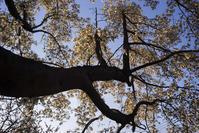 170327木蓮の木 - 一人の読者との対話