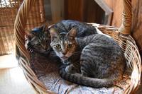 美猫姉妹のはずなのに - りきの毎日