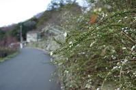 大阪 ユキヤナギの道 - ぶらり記録(写真) 奈良・大阪・・・