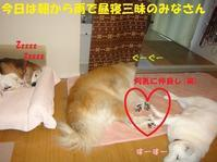 ひとりは苦手・・・ - もももの部屋(家族を待っている保護犬たちと我家の愛犬のブログです)