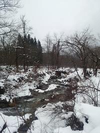 雪の中の森をお散歩 - Les feuilles du coeur