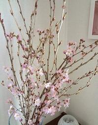 お部屋の桜 - handmade flower maya