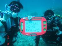 3月26日またまた海大荒れでも北部ビーチで問題なし!! - 沖縄・恩納村のダイビング・青の洞窟体験ダイビング・スノーケルご紹介