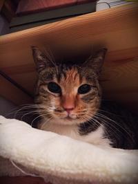 りぼんちゃんの正式譲渡 - にゃんず日記