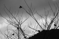 朝の散歩 土肥編 (4cut) -     ~風に乗って~    Present