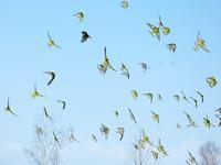 行く鳥 - ピアノ教室の風景