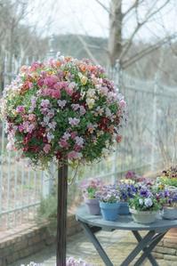 春の庭 3 - 気ままにお散歩