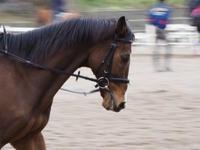 流し撮り 馬 - 心の万華鏡