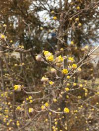 春は - 三楽 sanraku 造園設計・施工・管理 樹木樹勢診断・治療