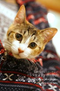 """sony α7RIIにおける瞳の透明感はなんだっての。 - 東京女子フォトレッスンサロン『ラ・フォト自由が丘』の""""恋するカメラ"""""""