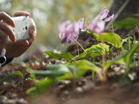 春光に咲く - 夢・ファンダンゴ