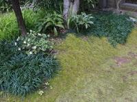 うちの庭事情 - 3色猫だんご+1