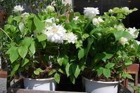 華やか花鉢入荷しています。 - 花と暮らす店 木花 Mocca
