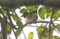 冬鳥健在、特にメンツに変わりはなし - 野鳥写真日記 自分用アーカイブズ