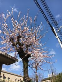 春をさがして… - 京都西陣 小さな暮らし
