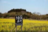 気まぐれ花畑 - aya's photo