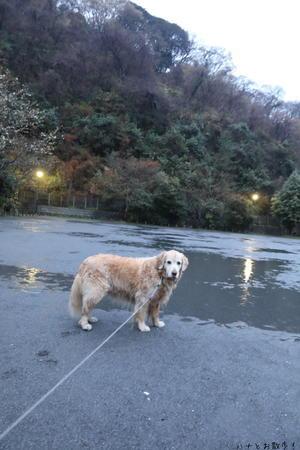 もう一個お願いしましゅ - ハナとお散歩!