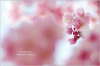 '17 河津桜*Ⅰ - It's only photo