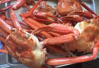蟹とホタルイカと私 - 雑食日記