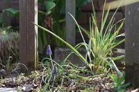 庭の様子 - お庭のおと