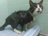 【猫】丸洗い - 人生を楽しくイきましょう!